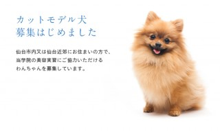 カットモデル犬アイキャッチ