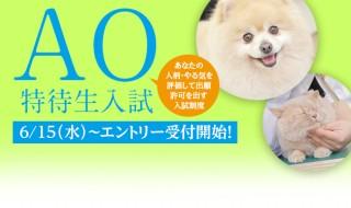 AO入試告知アイキャッチ