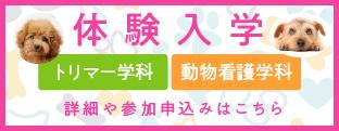 東北愛犬専門学院体験入学2019